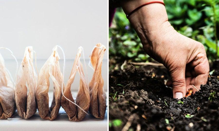 廢茶袋埋入土壤 九個令人驚訝的實用理由