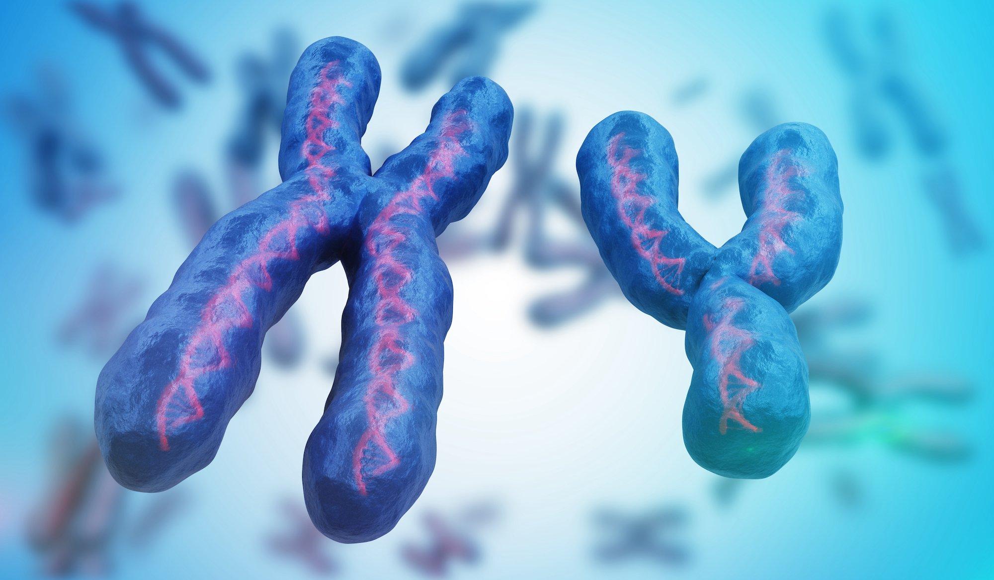 XY染色體及其中包裹的DNA雙螺旋結構示意圖。(ShutterStock)