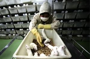 蘭州逾三千人感染布魯氏菌病 官方瞞報
