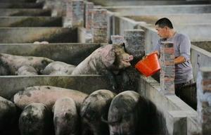 中國2億頭豬死於非洲豬瘟 近美歐豬隻總和