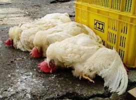 湖南爆發H5N1高致病性禽流感疫情
