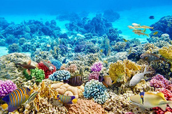 澳洲大堡礁海底世界生態美景是世界級的美景。(KAYAK提供)