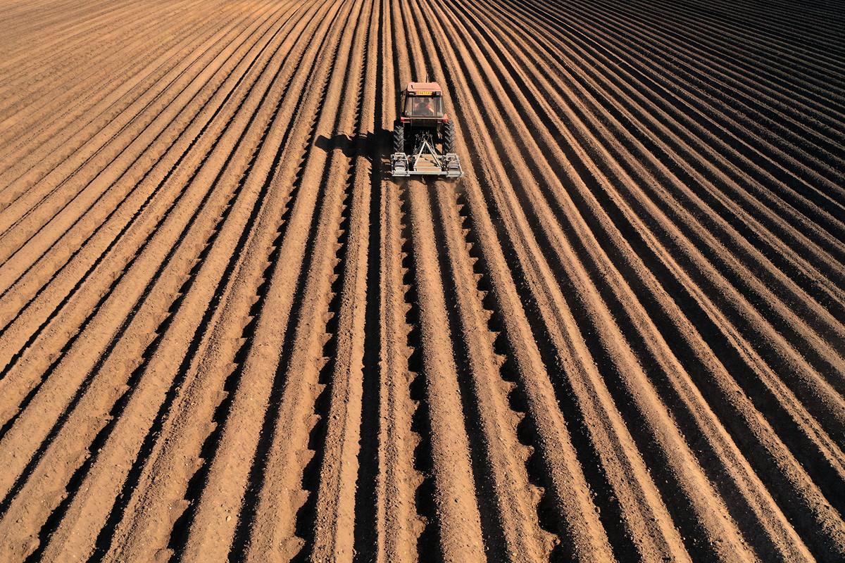 聯合國糧食專家表示,相較於病毒本身,疫情所帶來的經濟衝擊,恐讓更多人失去生命,我們可能面臨「《聖經》等級的大饑荒」。圖為英國的馬鈴薯田。(Getty Images)