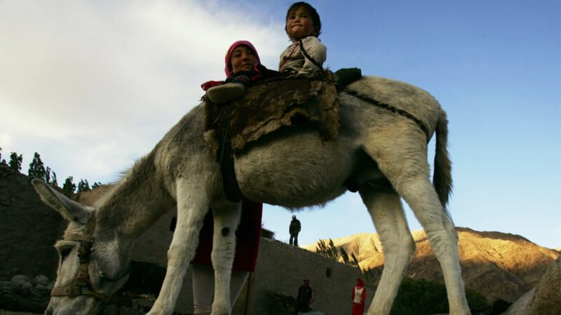 2007 年 9 月 6 日,在中國新疆維吾爾自治區塔什庫爾干塔吉克自治縣,一名塔吉克族婦女將她的孩子放在驢背上。(China Photos/Getty Images)