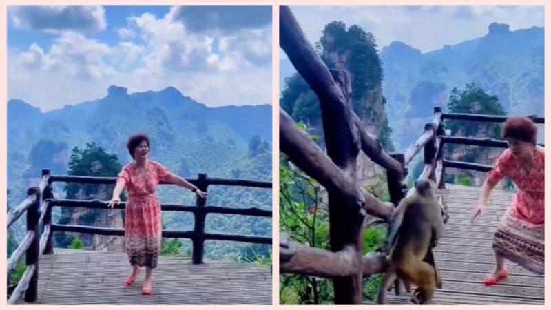 近日,一群中國大媽在景區唱歌跳舞,猴子趁機打劫,搶走包包。(影片截圖)