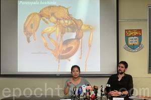 港大發現全球新蟻種