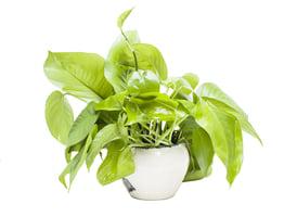 研究:植物能刪除無用記憶以保存能量
