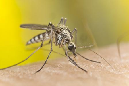 寨卡病毒迅速蔓延 哥倫比亞首傳3宗死亡病例