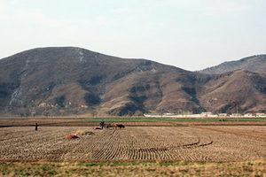 北韓糧食產量10年來新低 千萬人遭受飢荒